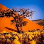 19 Tage quer durch Namibia – die Naturwunder Afrikas