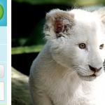 Tageskarte für den Zoo Safaripark Stukenbrock mit Nutzung aller Attraktionen und Parken für 13,90 €